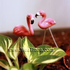 www.WeeTrees.com.... unique items for fairy garden and miniature landscapes! Including these little flamingos! Could there be anything cuter?!
