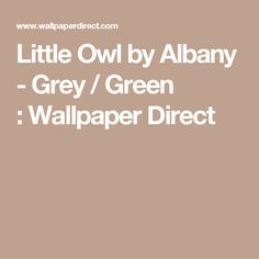 Little Owl by Albany - Grey / Green : Wallpaper Direct