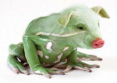(2017-06) Frø + gris = fris?