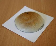 Make a Mushroom spore print. Ideas on how to start growing Mushrooms without needing to buy a kit.