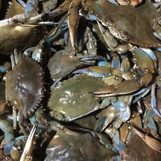 On Deck!!! #crablife !!!!!!