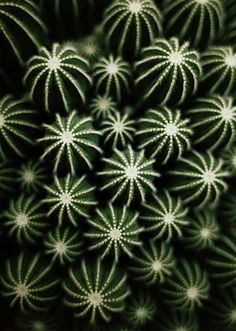 I know it's cacti, but the texture of this photo! -- 13