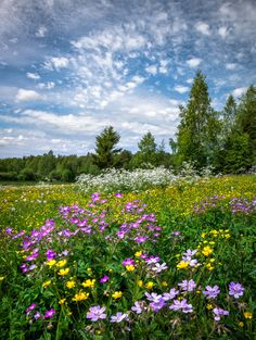 Flowery field (Finland) by Asko Kuittinen ? Flowers Nature, Wild Flowers, Meadow Flowers, Beautiful Landscapes, Beautiful Gardens, Quelques Photos, Summer Memories, Green Landscape, Summer Dream
