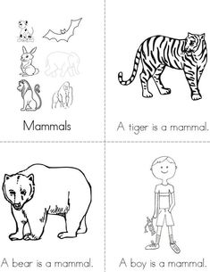 Mammals Mini Book - Sheet 1
