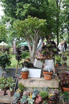 Stand de plantes succulentes, Les Trucculentes