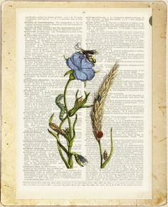 1600's botanical artwork no. 20 printed on page from от FauxKiss