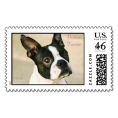 boston-terrier-0239, Boston Terrier Stamp