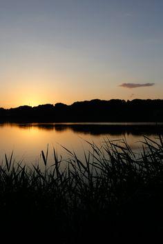 Lake Sanaru, Hamamatsu-city, Japan. 佐鳴湖 葦が揺れている 「Human being is a thinking reed.」