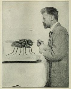 The giant fly at the American Museum of Natural History: finishing touches.   1920