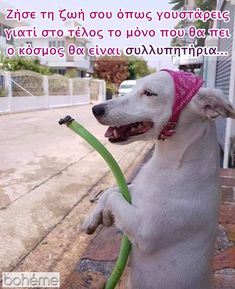 Greek Quotes, Notes, Humor, Animals, Report Cards, Animales, Animaux, Humour, Notebook