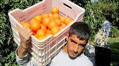Запрет турецкой продукции ударил по карману россиян