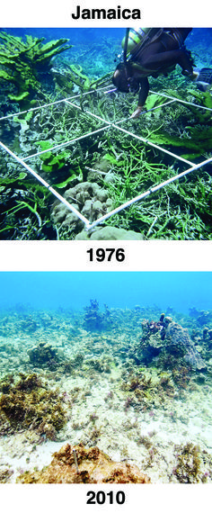 The powerful before-and-after photographs below were shared as evidence of ocean acidification at the 2012 International Coral Reef Symposium in Australia. Please help spread awareness about ocean acidification by pinning these before-and-after photos and