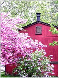 Pink barn and pink flowers <3