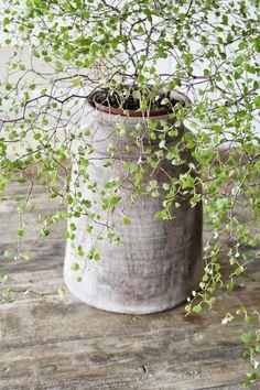 Awe Inspiring Indoor Gardening An Environment Friendly Thing Ideas. Exhilarating Indoor Gardening An Environment Friendly Thing Ideas.