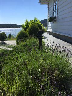 Sidewalk, Plants, Walkway, Flora, Plant, Walkways, Planting
