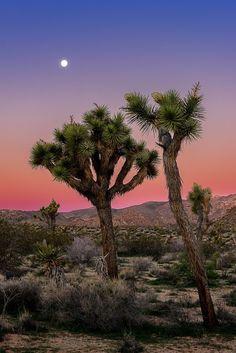 Moon over Joshua Tree National Park California by John Hight [OS][2048X1400]