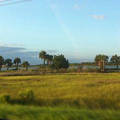 Those palm trees, the beautiful marsh… Tybee Island