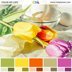 Today's dose of color inspiration is a lovely color palette featuring an arrangement of spring flowers in yellow, pink, and orange hues, next to a clear glass bowl of eggs.    #colorpalette #colorpaletteinspiration #colorpalettes #colors #colorsplash #colorscheme #colorstyle #colorsync #colorsoftheweek #ColorStudy #colorsoftheday #design #inspiration #designinspiration #color #colorful