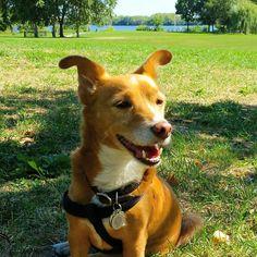 It's the 1st day of fall but it still feels like summer!  #dogsofinstagram #dogsoffishtown #dogsofphilly #rescuedogsofinstagram #adoptnotshop #adoptdontshop #fishtown #philadelphia