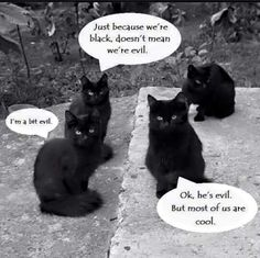 Black cat thoughts
