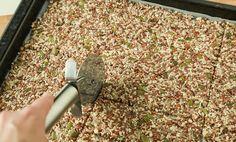 Sprø knekkebrød med kullsyre | EXTRA