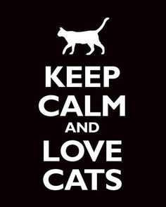 Los gatos han ganado mi corazón, estos animalitos tienen un fuerte temperamento, todavía puede ser muy tierno. ♥ Love cats