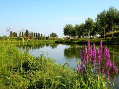 Una bellissima stradina che porta in riva al fiume...  #nikon , #photo , #photoview , #fotopaesaggi