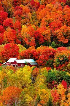"Beautiful scenery/ previous Pinner said ""Vermont during peak foliage season.Im Going To Be Going To Vermont In October To Take Beautiful Fall Scenery. Le Vermont, Beautiful World, Beautiful Places, Beautiful Scenery, Autumn Scenes, Fall Pictures, Amazing Pictures, Landscape Photos, Fall Landscape"