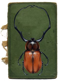 Paintings of insects using book covers as the canvas