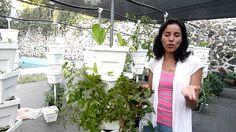 curso de  Agricultura Urbana  Greenants