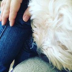 Taking a moment to chill with the pooch #afternoontea #pooch #dogsofinstagram #chillin #spoonielife #psoriaticarthritis