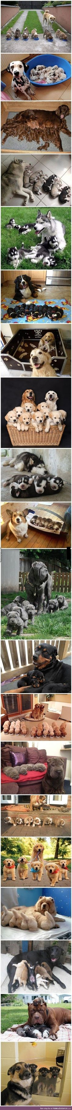 Doggos and their puppers