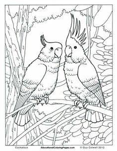 Adult Coloring Books By Unibul Press We Love