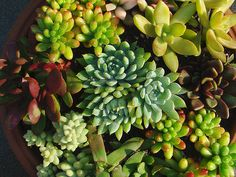 Mixed succulents  I tried this but all of mine died..might have to give it another shot!
