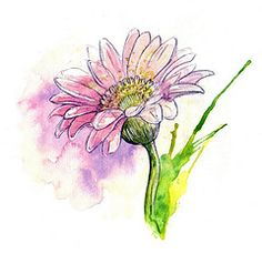 by Amy Holliday...click on flower for more of her great illustrations!
