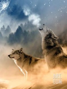 Home - Save gray wolf Wolf Images, Wolf Photos, Wolf Pictures, Beautiful Wolves, Animals Beautiful, Cute Animals, Wolves In Love, Majestic Animals, Stars Night