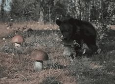 Discover & share this Bear GIF with everyone you know. GIPHY is how you search, share, discover, and create GIFs. Funny Animal Videos, Cute Funny Animals, Funny Cute, Animals And Pets, Baby Animals, Animal Pictures, Funny Pictures, Funny Pics, Gifs