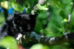 Kitten trying to climb a tree