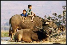 Shan Birma
