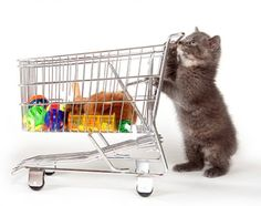 Supplies Needed for a New Kitten  http://mentalitch.com/supplies-needed-for-a-new-kitten/