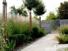 W moim ogrodzie, gdzie czas leniwy... - strona 862 - Forum ogrodnicze - Ogrodowisko