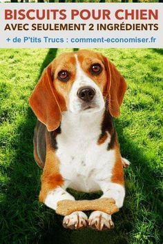 DIY Pets : 5 Homemade Treats Recipes For Your Dog and Cat 2 Ingredient Dog Treats Recipe Sharing is caring, don't forget to share ! Puppy Treats, Diy Dog Treats, Homemade Dog Treats, Dog Treat Recipes, Dog Food Recipes, Easy Recipes, Food Dog, Puppy Food, Dog Biscuits