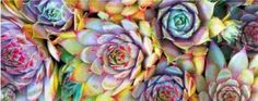 Colors, Facebook cover