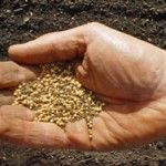How to store your seeds for next year.- Underwood Gardens - Caretakers of the Seeds
