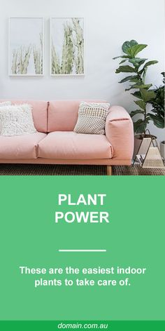 Stop telling yourself you're a plant killer and give yourself a fighting chance of joining the growing brigade of house plant lovers by choosing the right green stuff. Start with these forgiving specimens.