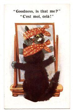 CHAT.CAT.KATZE    C EST MOI CELA ! GOODNESS IS THAT ME ?