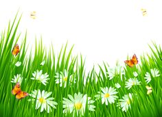 Grass with White Flowers PNG Clipart