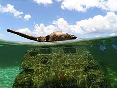 One of many Sherman tanks in the waters of Saipan