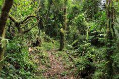 san gerardo forest   - Costa Rica