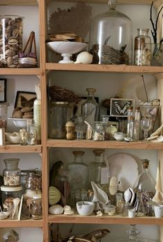 Curiosity cabinet | Sibella Court